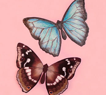 Paint Your Own Butterfly