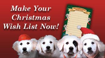 Christmas Wish List Activity