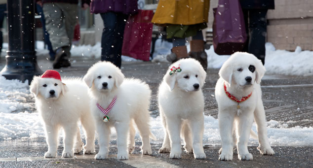 Home of the Great Pyrenees