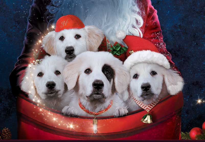 The Santa Pups